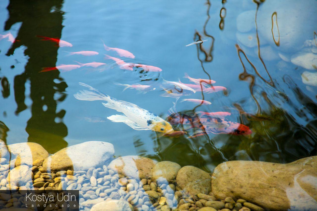 Чистота воды в наших водоёмах