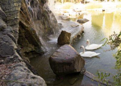 Водопад с озером для лебедей