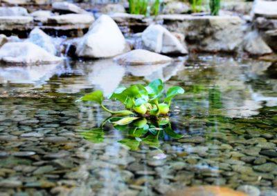 Декоративный пруд для сада